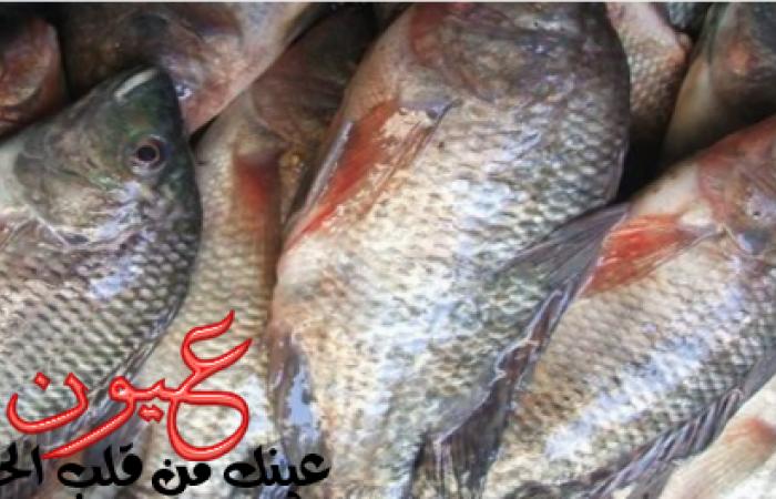 التموين تطرح السمك بمختلف أنواعه بأسعار مخفضة اليوم.. البلطي يبدأ من 6 جنيهات.. تعرف علي منافذ البيع
