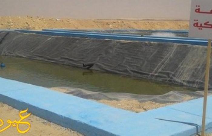 """الاستزراع السمكي : بدء أول إنتاج من """"الأسماك"""" بشرق قناة السويس نوفمبر المقبل ..."""