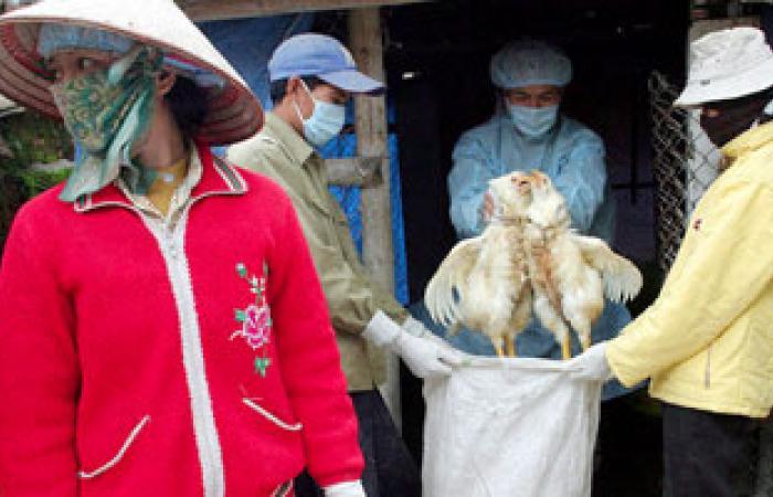 باحثون: الكشف عن سلالة جديدة من أنفلونزا الطيور