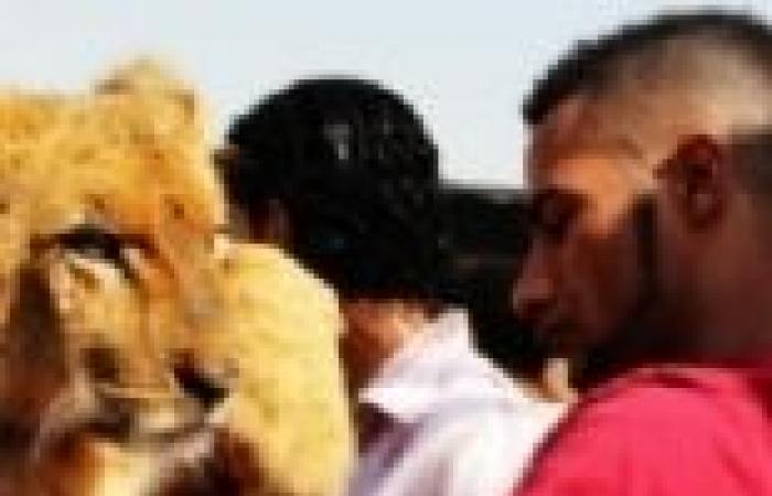 """""""عبده موتة"""" يصور مشاهد المطاردات في """"قلب الأسد"""""""