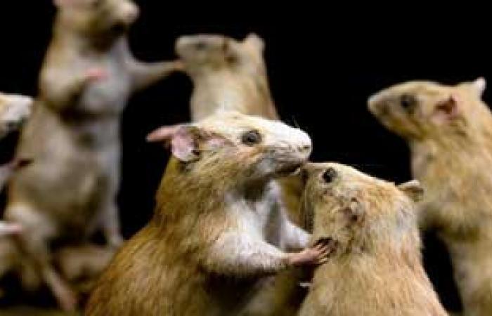 فقدان إنزيم بالمخ يؤدى إلى زيادة شعور الفئران بخوف غير عادى