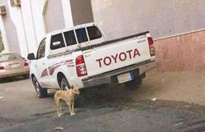 كلاب ضالة ترعب سكان جبل السيدة