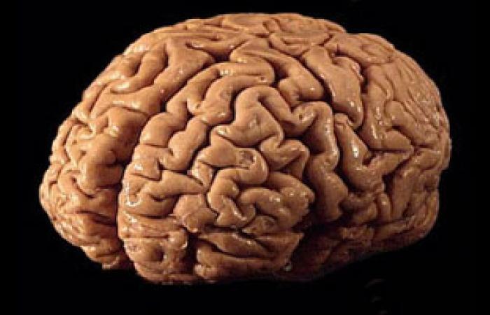 المخ المتحكم فى معدل استهلاك الملح وليس النظام الغذائى