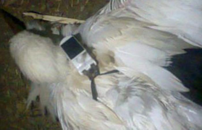 الجارديان: قصة طائر التجسس تسلط الضوء على زيادة كراهية الأجانب فى مصر