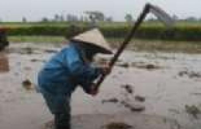 مخاوف من تدهور شركات الأرز التابعة للدولة نتيجة غياب قرار تكوين احتياطي