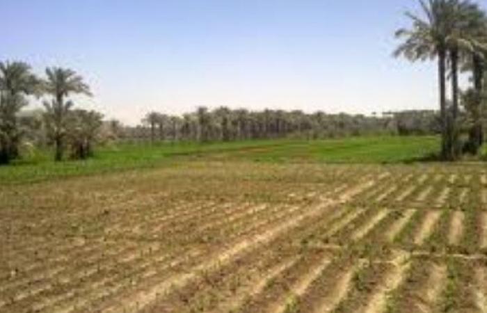 الزراعة | مصر تفقد 3 أفدنة «خصبة» كل ساعة