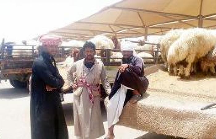 «بلدي الرياض»: سوق أغنام العزيزية تحت النظر