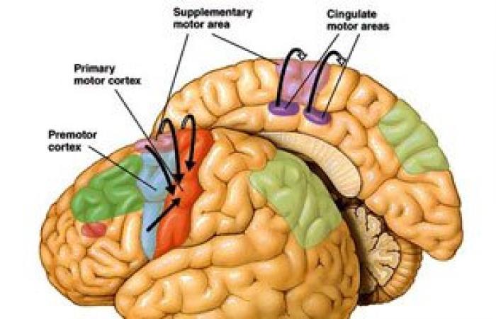 تعرف على أعراض ضعف وتلف الأعصاب.. أهمها التنميل والشعور بالألم