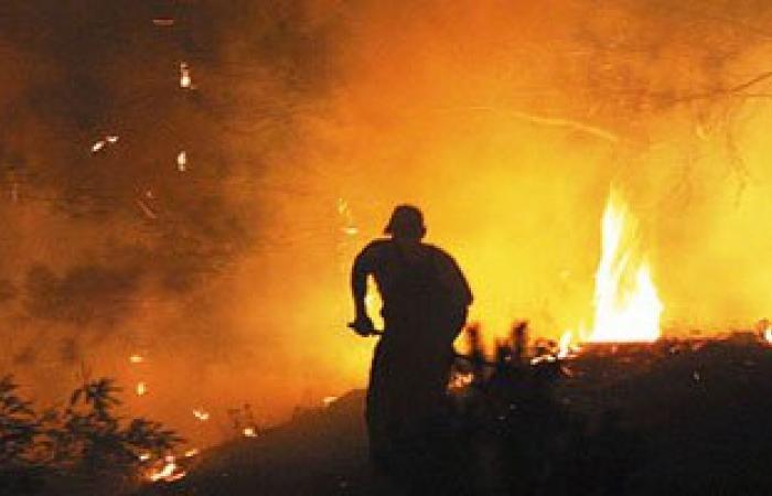 السيطرة على حريق بمزرعة نخيل بالوادى الجديد وإصابة 4 أشخاص بالاختناق