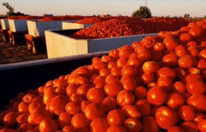 """أخبار المغرب اليوم.. """"الطماطم"""" تُثير أزمة بين الرباط وإسبانيا"""