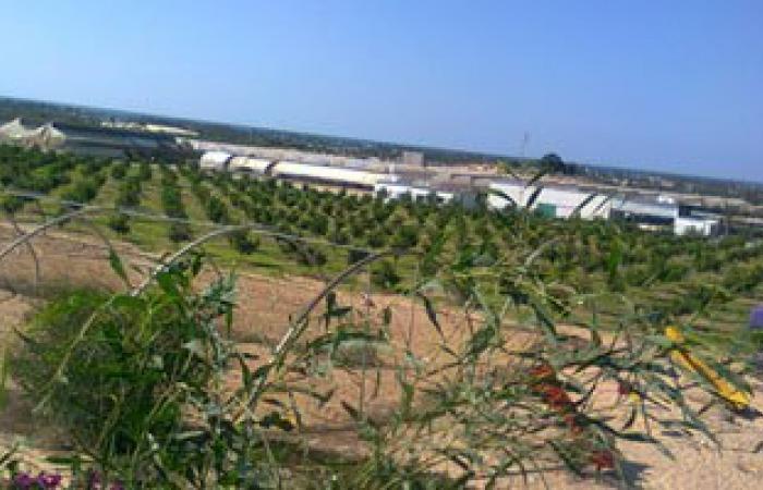 50مليون جنيه لزراعة 500 فدان بالتجمعات البدوية فى جنوب سيناء