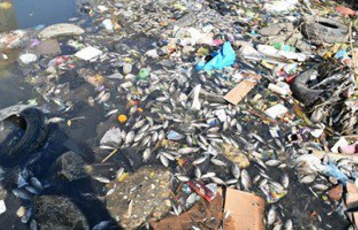 نفوق أسماك بالدقهلية لليوم الثانى..ومصدر:مادة سامة بالماء