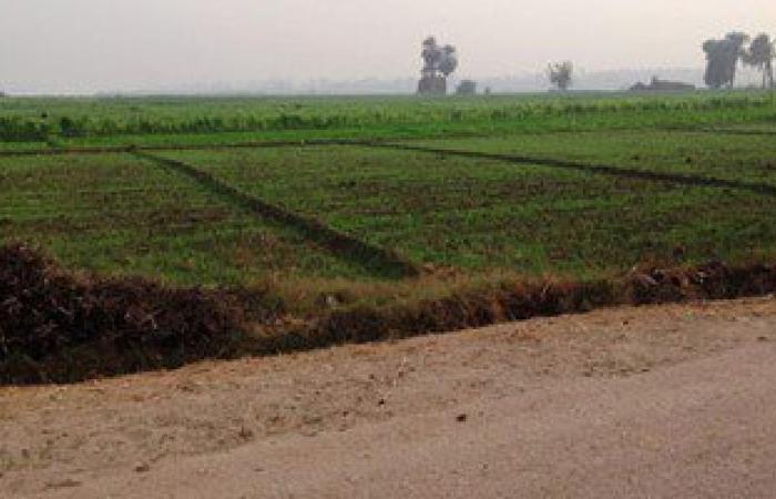 زراعة 10آلاف فدان وإقامة مجتمعات جديدة ندوة اليوم بالوادى الجديد