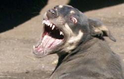 حيوانات مفترسة تهاجم أهالي أسيوط