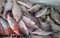السلطات السعودية ترفض استلام شحنة أسماك بلطي مصرية فاسدة وتعيدها لميناء سفاجا