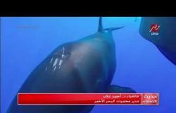 """الكائن البحري الغريب الذي تم العثور عليه هو نوع من الدلافين يسمي """"القاتل الكاذب"""""""
