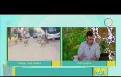 8 الصبح - استخدام الخرطوش في مكافحة الكلاب الضالة .. أزمة بين وزارة الزراعة وجمعيات الرفق بالحيوان