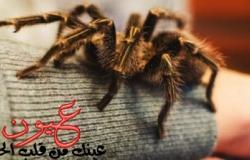 """""""أراكيبتروفوبيا"""" مرض الخوف من العناكب.. والقلق والغثيان أبرز الأعراض"""