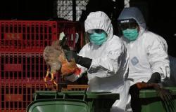 موسكو تعلق على قرار الإمارات حظر استيراد الطيور من روسيا