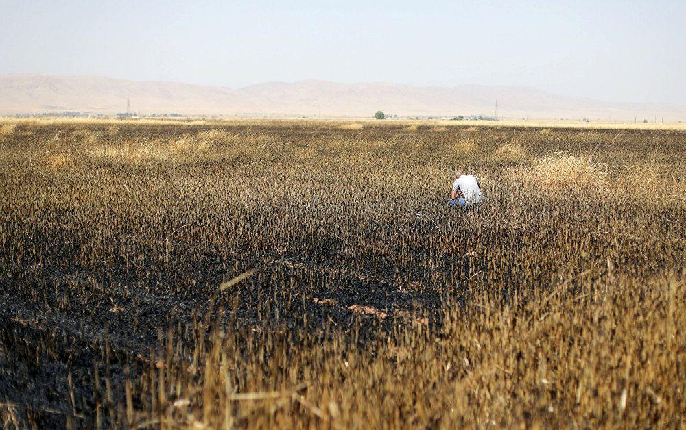 حقل قمح محترق في القامشلي في سوريا
