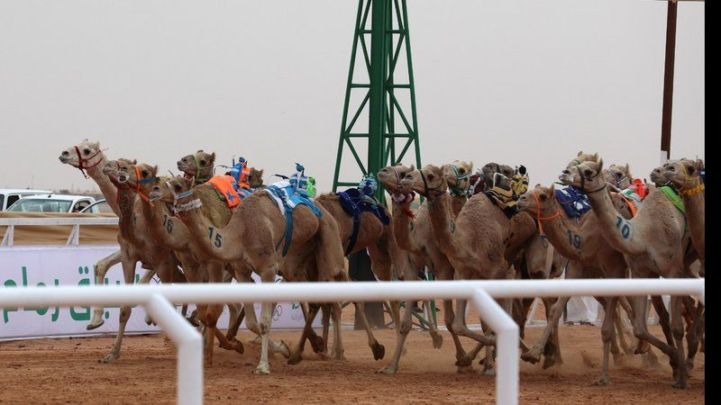 المنافسات تتواصل في سباقات الهجن في يومها الثالث