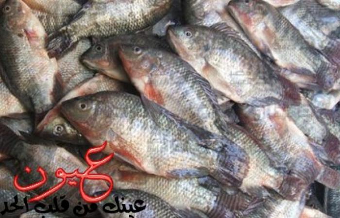 بالفيديو| أستاذ إنتاج سمكي يكشف كارثة تتعلق بالأسماك وتسبب فشل كلوي وكبدي