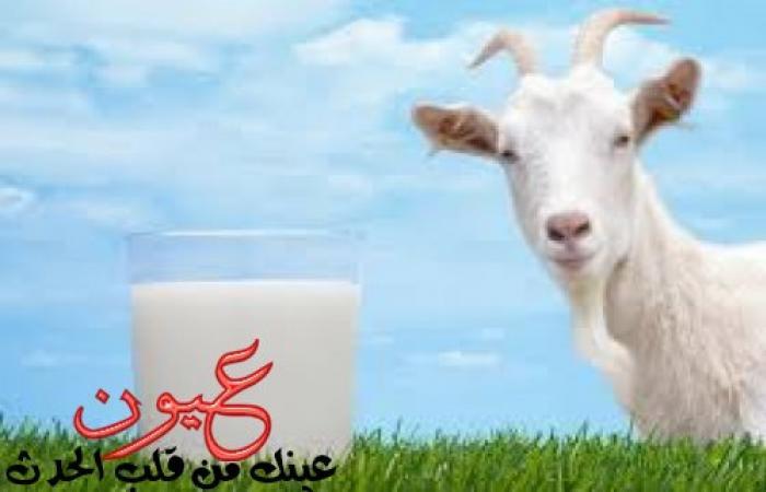 فوائد صحية كثيرة تجذبك لشرب حليب الماعز