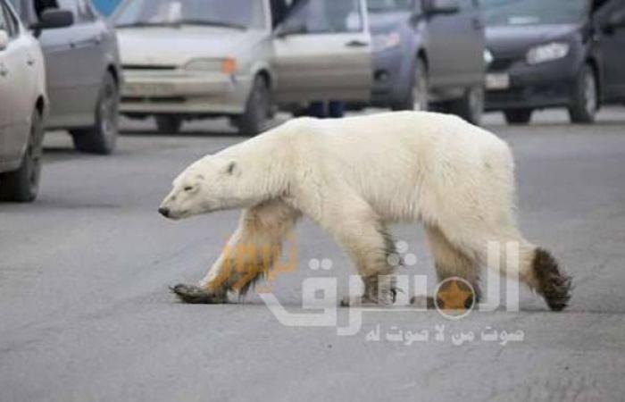 وزارة البيئة الروسية تحذر من مصادفة حيوانات برية خطيرة