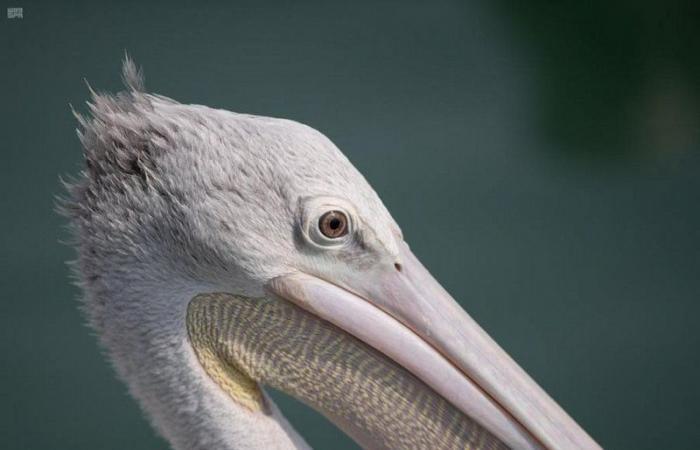 """شاهد محمية جزر فرسان.. سياحة البر والبحر والأعماق في """"شتاء السعودية"""""""