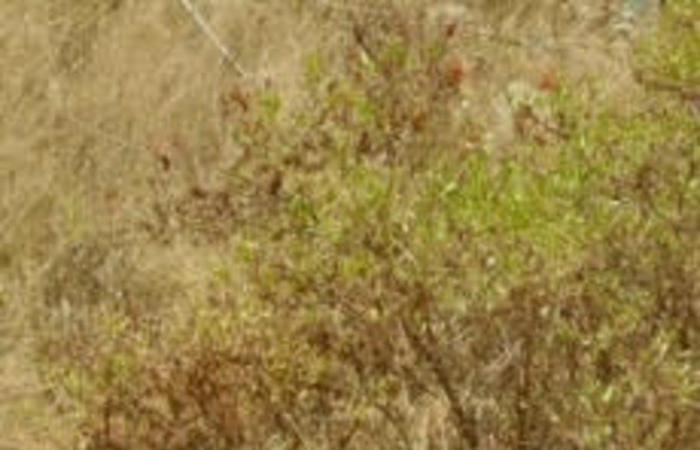 """""""الحياة الفطرية"""": الجبال المحيطة بمنتزه بلجرشي من المواقع التاريخية لانتشار الوعول قديمًا"""