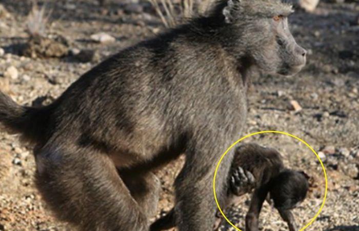 لماذا تحمل بعض الحيوانات صغارها بعد الموت؟.. تفسير محزن