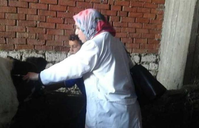 «بيطري الغربيه»: تطعيم 240 ألف رأس ماشية ضد الحمى القلاعية والوادي المتصدع
