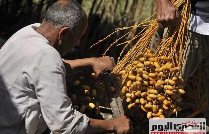 انطلاق ملتقى المصري الاول للتمور بمحافظة الوادي الجديد السبت المقبل