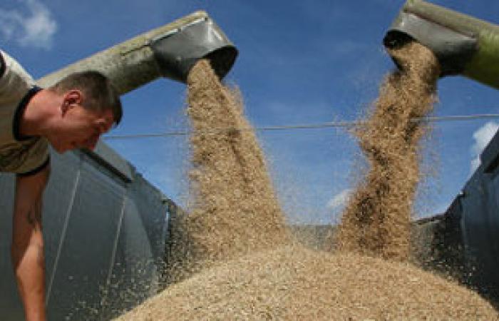 ارتفاع تكلفة واردات الجزائر من الحبوب 40.5% فى 4 أشهر