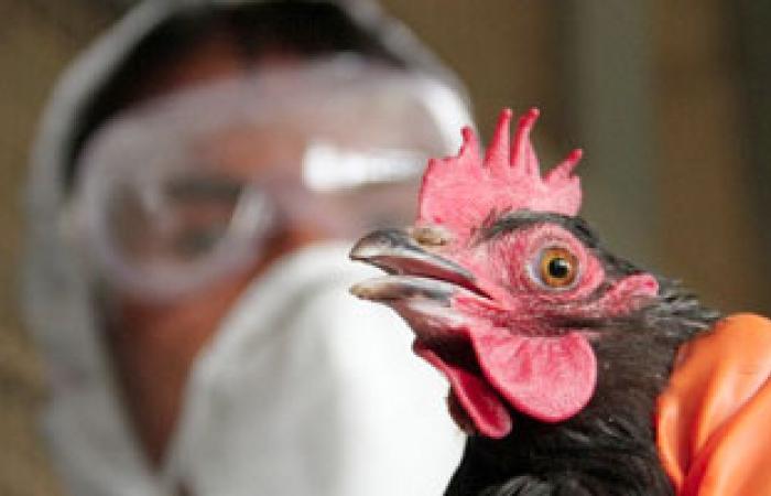 باحثون: سلالة قاتلة من أنفلونزا الطيور يمكن أن تنتقل عن طريق الهواء