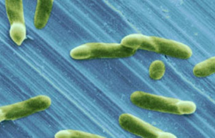 دراسة: فيتامين ج قد يخفف من مقاومة بكتيريا السل للمضادات الحيوية