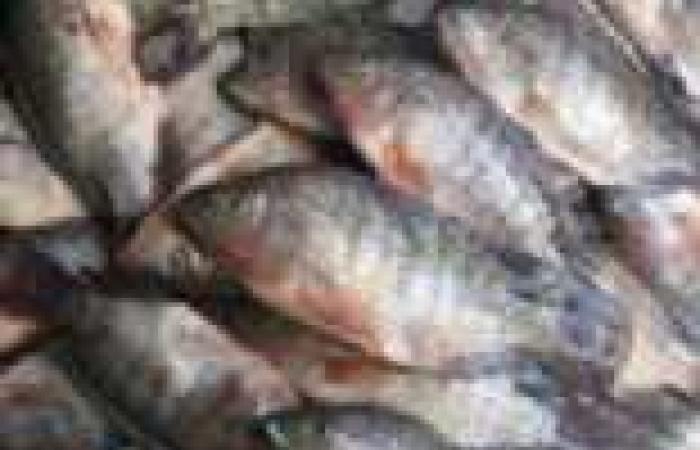 دراسة: تناول الأسماك يقي من الإصابة بمرض الزهايمر