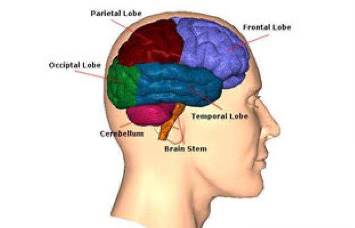 """""""القلب الأمريكية"""": 7 وسائل صحية للوقاية من السكتة الدماغية"""