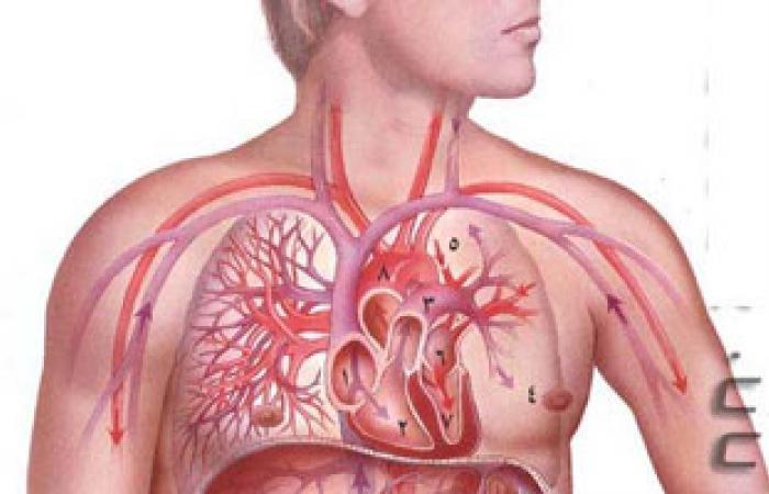 د. مجدى بدران يكتب: كيف تعمل المناعة داخل جسم الإنسان؟