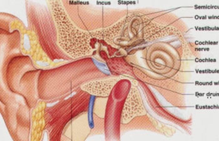 الجندى : الرفرفة الأذنية قد ينتج عنها مرض الشرايين الطرفية