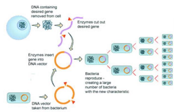 الإندبندنت: علماء يتوصلون لتصنيع كروموسومات بشرية لعلاج أمراض وراثية