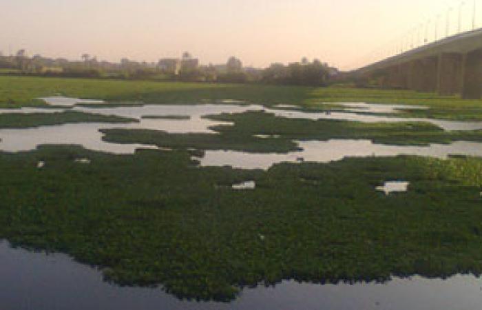 """""""الرى"""": إجراءات فورية لمواجهة ورد النيل بفرع رشيد"""