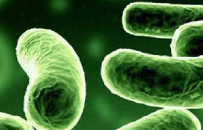 ما فائدة البكتيريا النافعة بالجسم وأين توجد؟