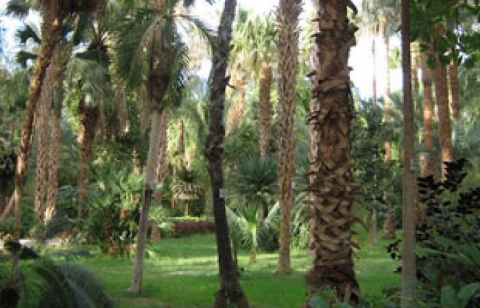 """""""الحديقة النباتية بأسوان"""" تعلن البدء فى خطة تشجير كورنيش النيل"""