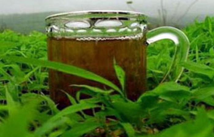 دراسة:مستخلصات طبيعية من الشاى الأخضر تقتل الأورام السرطانية فى الطفولة