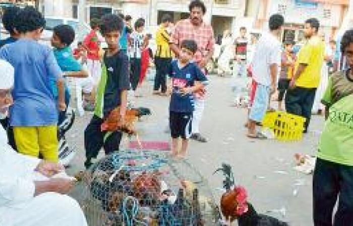 «سوق الحمام» يفتح أبوابه بارتفاع الأسعار في أبو عريش