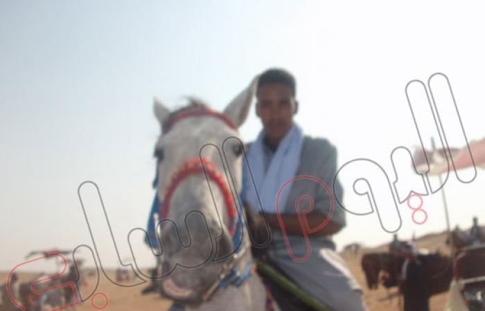 مشاركة 400 حصان فى مهرجان الفروسية غرب إدفو