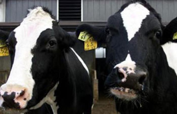 معالجة 13 ألفا و128 حيوانا بالطب البيطرى بقنا