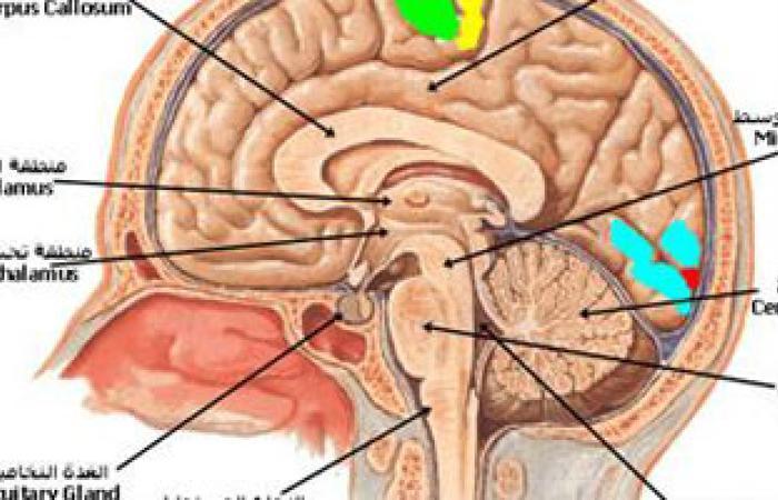 طيارو طائرات التجسس الأمريكية معرضون للإصابة بتلف فى خلايا المخ