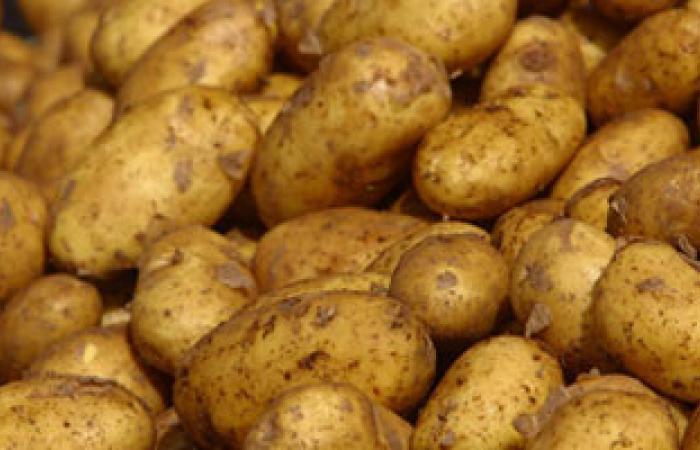 المفاوضات المصرية الروسية تنجح فى رفع الحظر عن البطاطس